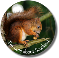 Picture for category Scottish Wildlife