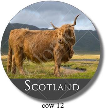 Highland Cow 12