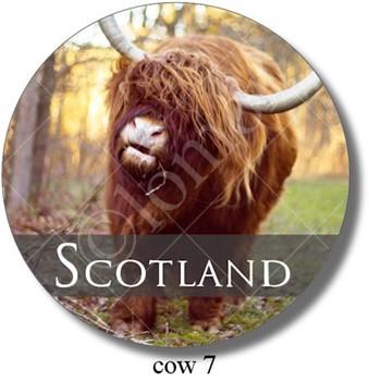Highland Cow 7