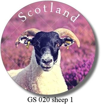 GS 020 sheep 1