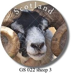 GS 022 sheep 3