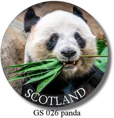 GS 026 panda Scotland