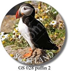 GS 028 puffin 2 Scotland