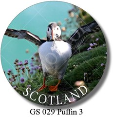 GS 029 Puffin 3 Scotland