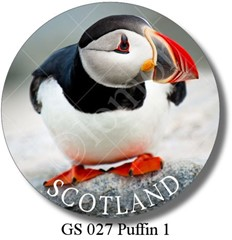 GS 027 Puffin 1 Scotland