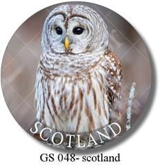 GS 048 - scotland owl 2