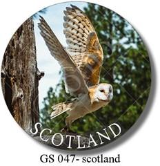 GS 047 - scotland owl 1